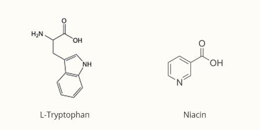 l-tryptophan-nebenwirkung