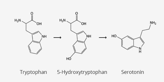 aminosaeure-tryptophan